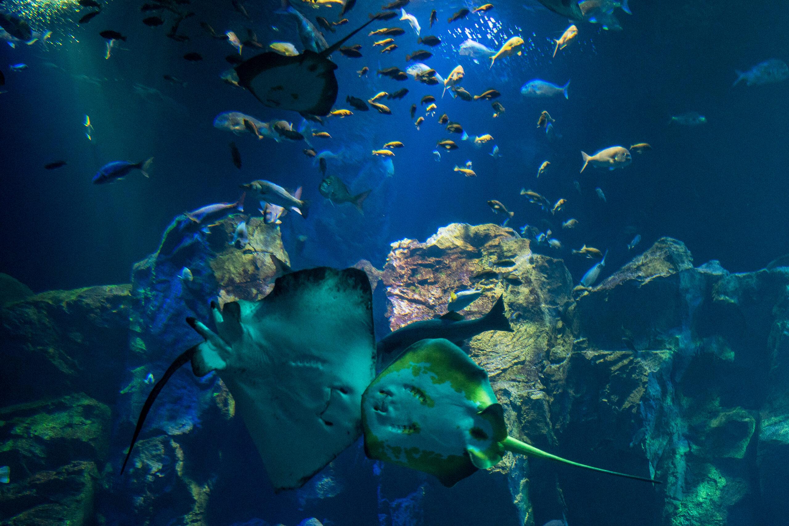 魚種の豊富な日本海を再現した「男鹿の海大水槽」